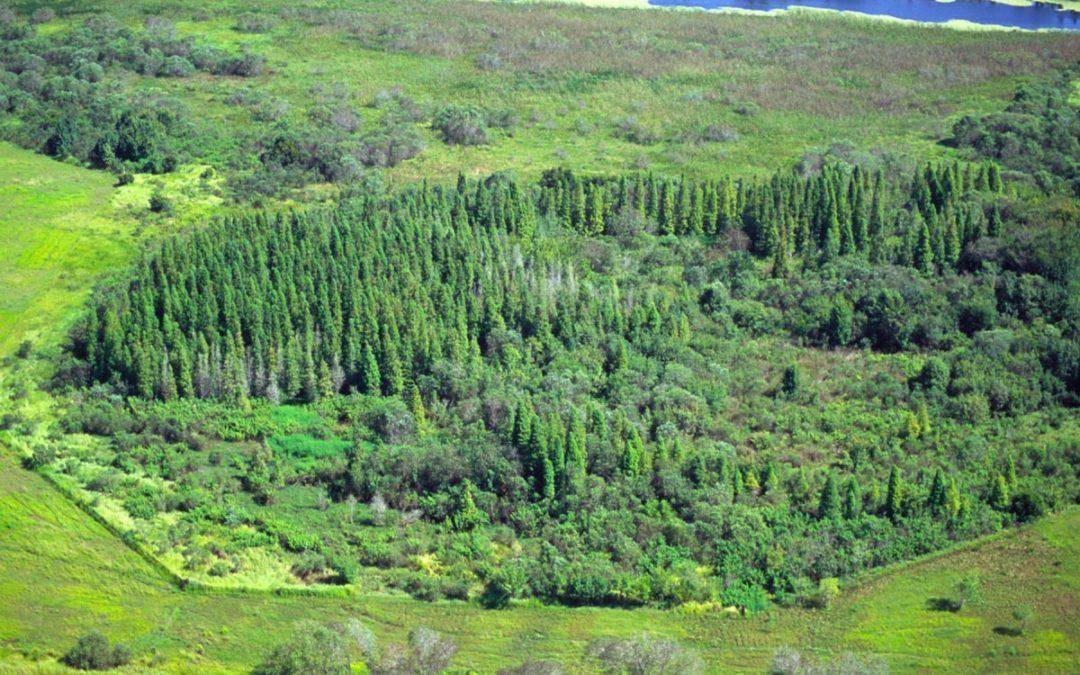 Wetlands vs. Uplands